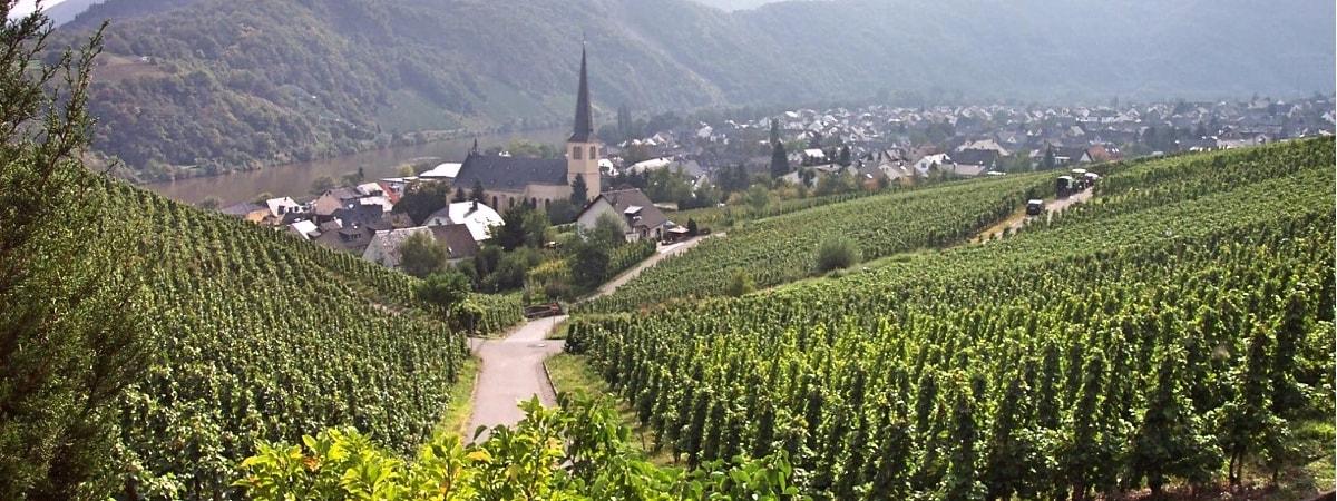 Fietsvakantie 3: 6-dagen Moezel - van Trier naar Cochem of Koblenz