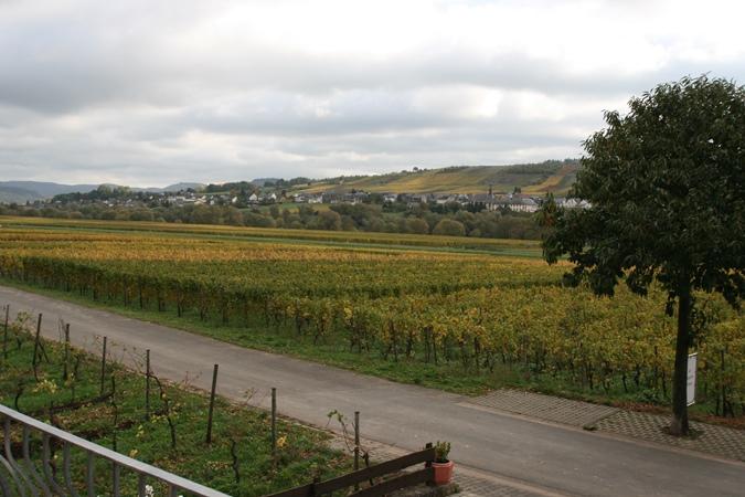 uitzicht vakantiewoningen wijnbergen